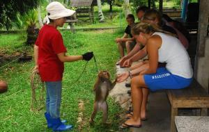 วิทยาลัยฝึกลิงเพื่อการเกษตร ภาพจาก www.firstschoolformonkeys.com/
