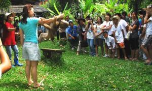 นักท่องเที่ยวให้ความสนใจการฝึกลิงที่วิทยาลัยฝึกลิงเพื่อการเกษตร ภาพจาก www.firstschoolformonkeys.com/