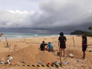 เฮ! แม่เต่ามะเฟืองขึ้นวางไข่ชายหาดเขาหน้ายักษ์ จ.พังงา อีกรัง นับได้ 100 ฟอง