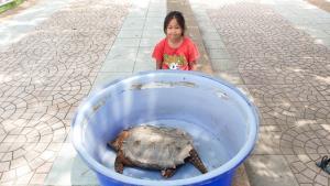 อึ้ง! พบเต่าอัลลิเกเตอร์ ซากดึกดำบรรพ์มีชีวิตติดร่างแห-กัดมือคนหาปลากำแพงเพชร