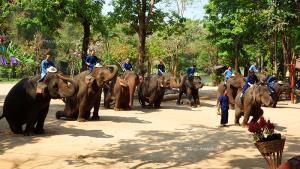 ความน่ารักของช้างที่ศูนย์อนุรักษ์ช้างไทย จังหวัดลำปาง