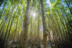 นักสิ่งแวดล้อม ทช. แนะปลูกป่าชายเลน ลดโลกร้อนได้ดีกว่าป่าบก!