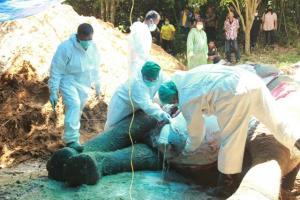 เศร้าอีก!! ช้างป่าสีดอล้มที่ อช.เขาคิชฌกูฏ พบพลาสติกในลำไส้!