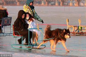 นักท่องเที่ยวนั่งรถลากเลื่อน โดยใช้สุนัขไซบีเรียนลากเลื่อนทั่วบริเวณรอบแม่น้ำซงฮวา