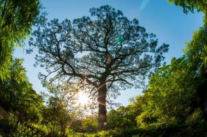ยูนิลีเวอร์ ประกาศแผนเพื่อต่อสู้กับการเปลี่ยนแปลงทางสภาพภูมิอากาศ