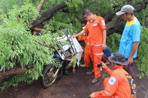 สลด! พายุกระหน่ำโค่นต้นมะขามยักษ์ล้มทับยายแม่ค้าไส้กรอก จอด จยย.หลบฝนดับคาที่