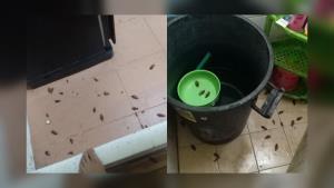 อย่าหาทำ! ไวรัลภาพฝูงแมลงสาบ วัยรุ่นคะนองใช้ยาฆ่าแมลงฉีดรัง สุดท้ายถูกบุกแก้แค้น
