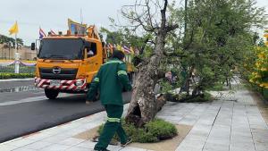 ลางร้ายมั้ย ต้นมะขามยักษ์เก่าแก่คู่ทำเนียบ ล้มครืน ขรก.วิจารณ์ลางไม่ดีโยงปัญหาในรัฐบาล-พปชร.