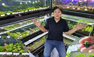 """(ชมคลิป) ไซส์เล็กแต่ราคาไม่เล็ก! """"Rainforest Plant"""" ร้านขายหลากพันธุ์ไม้น้ำ เริ่มจากความชอบ ต่อยอดขายสู่ต้นละหมื่น"""