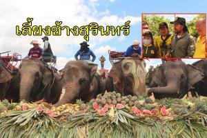 ชาวช้างปลื้ม! พระเอกแฝดขนอาหารกว่า 10 ตันเลี้ยงช้างสุรินทร์ มอบเงิน-ถุงยังชีพคนเลี้ยงช้าง