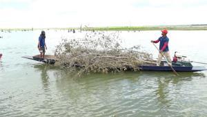 """อช.น้ำพองร่วมชาวบ้านทำ """"เยาะปลา"""" ท้ายเขื่อนอุบลรัตน์ หวั่นได้แต่จับกินจับขายปลาหลายชนิดสูญพันธุ์แน่"""