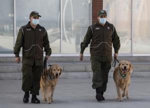 เอาจริง! ตำรวจชิลีเร่งฝึกสุนัขดมกลิ่น ค้นหาผู้ติดเชื้อโควิด-19