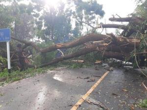 พายุพัดกระหน่ำเมืองชัยนาท ทำต้นไม้ขนาดใหญ่หักโค่นกีดขวางถนน