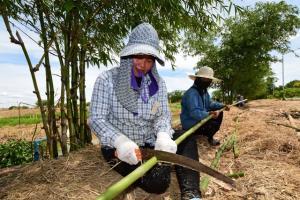 """""""โครงการฟาร์มตัวอย่างต้านภัยโควิด-19"""" สานต่อพระราชปณิธาน ภายใต้ปรัชญาเศรษฐกิจพอเพียง"""