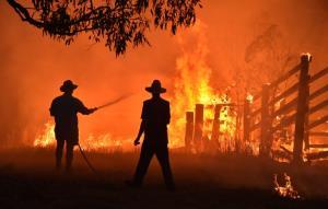 ภาพชาวเมืองออสเตรเลียพยายามดับไฟป่า (AFP / Peter Parks)