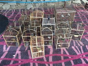 พญาเสือบุกจับพ่อค้าสัตว์ป่าขายผ่านสื่อออนไลน์ พร้อมของกลางเพียบ