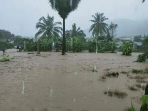 ยังอ่วมหลายอำเภอน้ำท่วมเมืองเลย ดินสไลด์-ต้นไม้หักโค่นปิดเส้นทางสัญจร