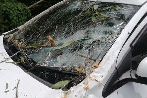 เฉียดตาย! ต้นกระถินยักษ์ล้มทับรถผู้ใหญ่บ้าน โชคดีเจ็บเล็กน้อย
