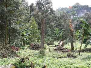 เกษตรเขต 5 เร่งเตรียมการช่วยเหลือพี่น้องเกษตรกรที่ได้รับผลกระทบจากพายุซินลากู