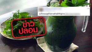 ข่าวปลอม! รักษามะเร็งระยะสุดท้าย ด้วยการดื่มน้ำปั่นผักจิงจูฉ่าย
