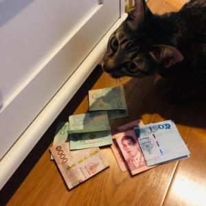 """สุดฮา! หนุ่มเผยสาเหตุเงินหาย พบแมวขโมย ทาสแมวแห่ชมตั้งฉายา """"น้องแมวออมเงิน"""""""