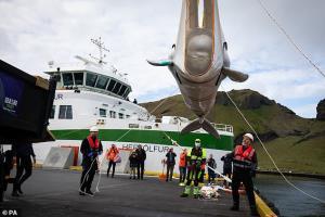 วาฬเบลูก้ายิ้มแป้น ดีใจได้กลับบ้าน