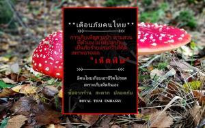 """""""สถานเอกอัครราชทูต ณ กรุงมอสโก"""" ห่วงคนไทยรับประทานเห็ดพิษ เตือนอย่าเก็บเห็ดที่ตัวเองไม่ได้ปลูก"""