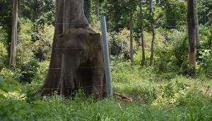เตือนระวัง! ช้างป่าสีดอแก้วตกมันหนีจากพื้นที่กักกันฯ หวั่นทำร้ายชาวบ้านซ้ำ