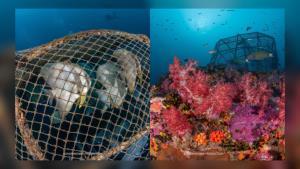 นักดำน้ำ! พบลอบยักษ์วางทับปะการังอ่อนที่หินแปดไมล์สตูล ดร.ธรณ์ ชี้สร้างความเสียหาย-ผิด กม.ได้