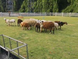 """วิศวกรหนุ่มใหญ่กลับบ้านเกิดเปิดฟาร์มสัตว์เลี้ยง """"เดอะเมาท์เท่นวิว@นาพละ, ตรัง"""""""