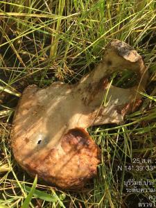 แทบช็อก! ผญบ.ไปหว่านปุ๋ยนาข้าวเจอชิ้นส่วนกระดูกมนุษย์เกลื่อนทุ่ง คาดถูกสัตว์แทะกินศพ
