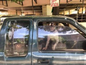 ทาสหมาใจสลาย! หมา 3 ตัวถูกขัง ในรถยนต์ที่เปิดกระจกไว้นิดเดียวหลายวันแล้ว