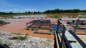 น้ำเจ้าพระยาเริ่มเพิ่มสูง-ขุ่นแดงฉับพลัน ปลากระชังริมฝั่งอุทัยธานีน็อกน้ำตายทุกวันแล้ว