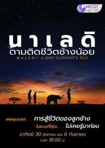 """สัมผัสชีวิตลูกช้างน้อยกำพร้า  """"นาเลดิ ตามติดชีวิตช้างน้อย"""" ทางช่อง 9"""