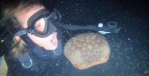 ดร.ธรณ์ เดือด! เจอ 2 นักท่องเที่ยวดำน้ำไล่จับสัตว์ทะเลมาถ่ายรูปเล่นในช่วงกลางคืน (ชมคลิป)