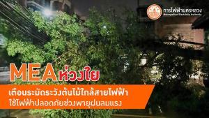 MEA ห่วงใยใช้ไฟฟ้าปลอดภัยช่วงพายุฝนลมแรง เตือนระมัดระวังต้นไม้ใกล้สายไฟฟ้า