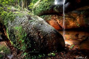 หินหัวพญานาคหรือหินหัวงู (1)  (ภาพ : เพจ Buengkan day)
