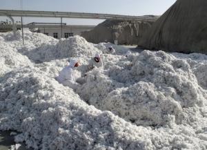สหรัฐฯ เตรียมสั่งแบน 'ฝ้าย-มะเขือเทศ' จากซินเจียง อ้างมีการ 'บังคับใช้แรงงาน'