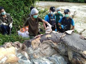 สลด! พบซากช้างป่าไม่มีหัว-ปลายหาง ใน จ.นราฯ คาดถูกคนร้ายฆ่าเพื่อเอางา