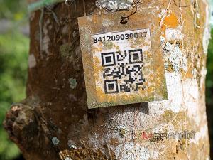 QR Code ที่ต้นกระท่อม