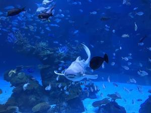 """""""อควาเรีย ภูเก็ต"""" พร้อมนำคุณสู่โลกใต้ทะเล 18 กันยายนนี้"""