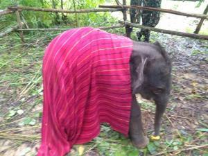 อุทยานฯ เผยภาพลูกช้างพลัดหลงแม่อีกตัว ล่าสุดอาการแข็งแรงดี