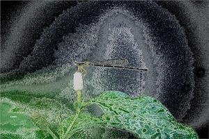 """""""ชะพลู"""" พืชผักสมุนไพรพื้นบ้านที่เป็นทั้ง 'อาหารเลิศรส' และ 'ยาชั้นยอด'"""