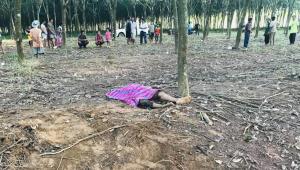 คนงานกรีดยางใน จ.ระยอง ถูกช้างป่าทำร้ายดับอนาถ
