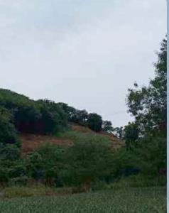 เจออีก! นายทุนลอบถางป่าทำสวนผลไม้บนเขาในเขตนิคมสร้างตนเอง จ.ระยอง