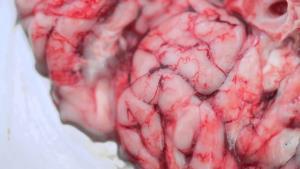 """เปิดสูตรเด็ด """"หมกสมองหมู""""  by Pong SinnerMann"""