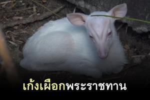 """ทำความรู้จัก """"เก้งเผือก"""" สายพันธุ์พระราชทาน กับปมสังหาร ผอ.องค์การสวนสัตว์ฯ"""
