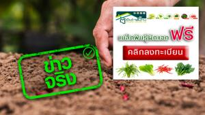 ข่าวจริง! กระทรวงเกษตรฯ เปิดให้ลงทะเบียนรับเมล็ดพันธุ์พืชผักสวนครัว ฟรี!
