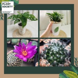 """ชื่นชมดอกไม้และพันธุ์ไม้หายาก ในงาน """"Siam Discovery Plant Society"""""""