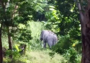 จนท.ชุดเฝ้าระวังช้างป่าเตือนชาวบ้าน จ.ระยอง ระวังช้างป่าตกมันช่วงหน้าหนาว
